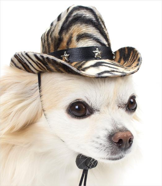 dog hats ... chihuahua wearing tiger cowboy hat for dogs ... setalji