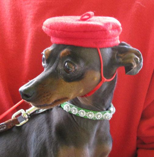 hi bad dog hats ... pyavsjp