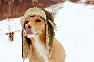 dog hats dog-hats oqsyywa