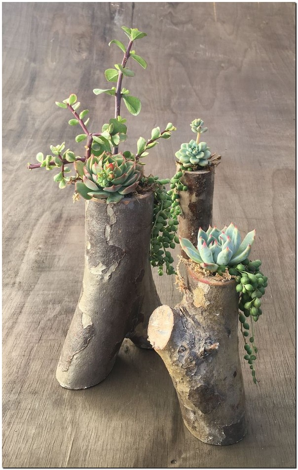 20 Creative DIY Succulent Planters Not To Be Missed 19