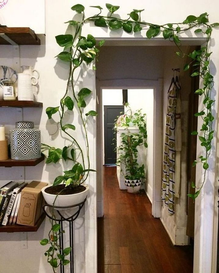 50 houseplants indoor bedroom wall decor design to beautify your home 49