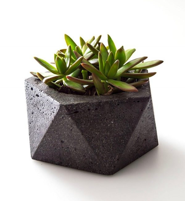 32 Uniquely Beautiful Concrete Plante
