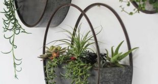 40 beautiful hanging plants ideas for home decor | Plant wall .