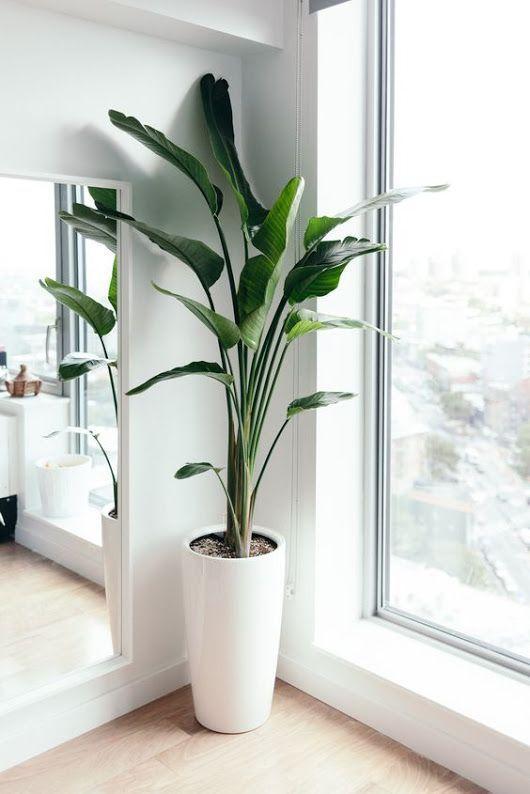 Sign in | Tall indoor plants, Living room plants, Birds of .