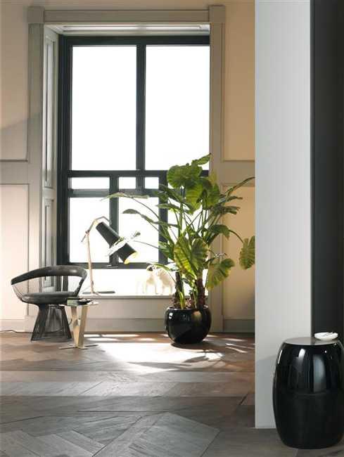 Beautiful House Plants Modern Decor