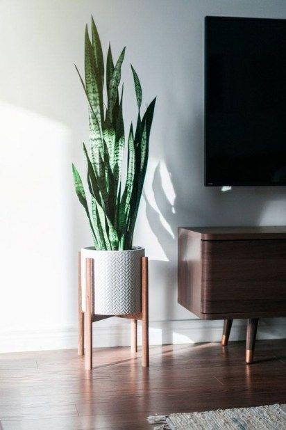 Amazing House Plants Indoor Decor Ideas Must 49 | Mid century .