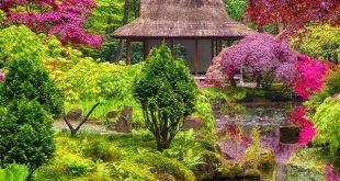 Japanese garden ideas: how to plant a Japanese gard