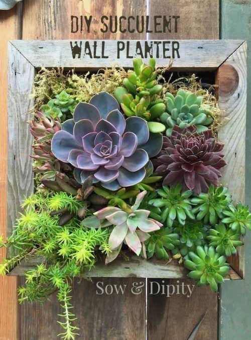 Easy Succulent Wall Planter -   Succulent wall planter, Succulent .
