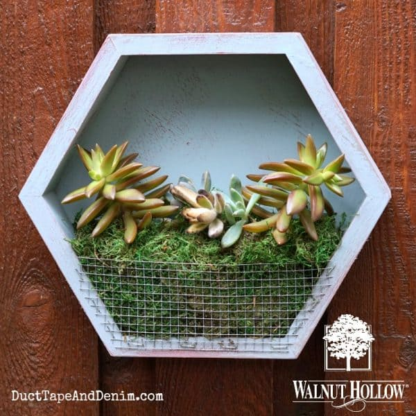 24 DIY Succulent Planter Ideas for Your Home or Pat