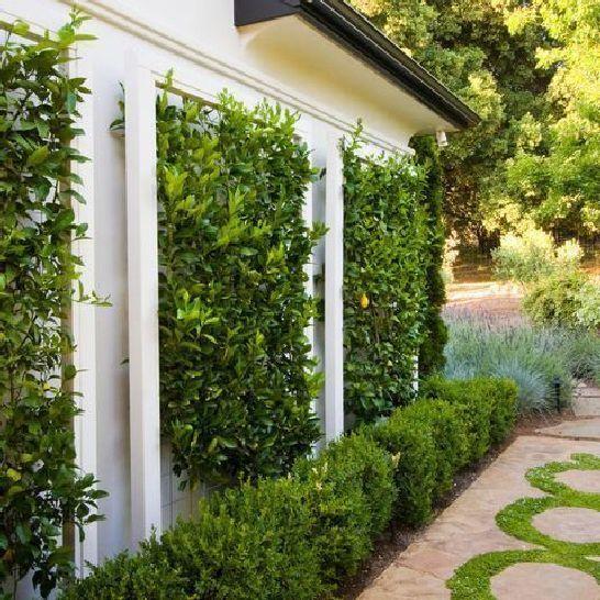 Building a garden fence with a 45 trellis design ideas 2 .