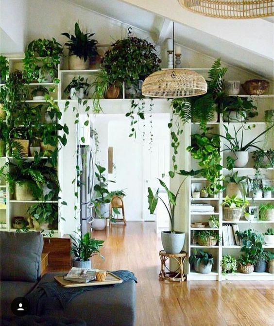 indoor plants; indoor plants decoration; house plants; mini .