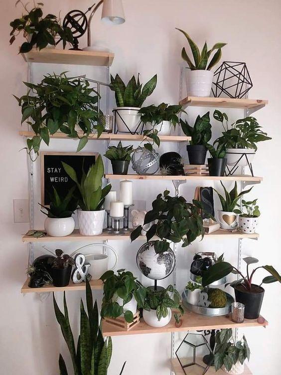 House Plants Indoor Bedroom Wall Decor   Design