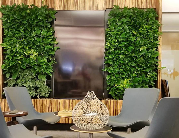 Living Green Plant Wall Design