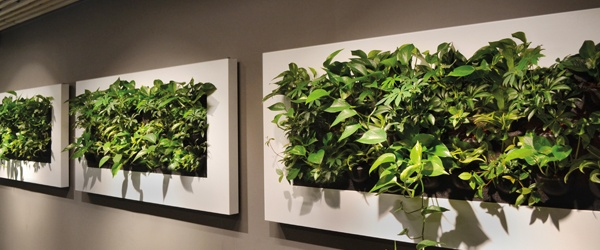Green Wall Designs - Sustainable Living Plant Wall Desi