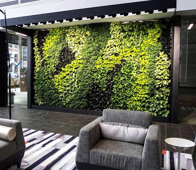Office Plants Service & Living Walls | Botanical Desig