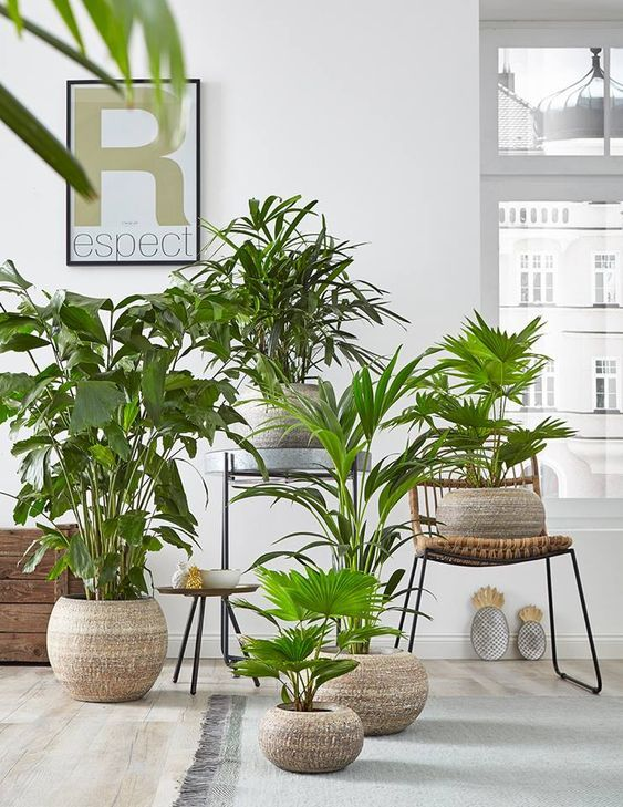 Plant Stand Design Ideas for Indoor   Houseplants