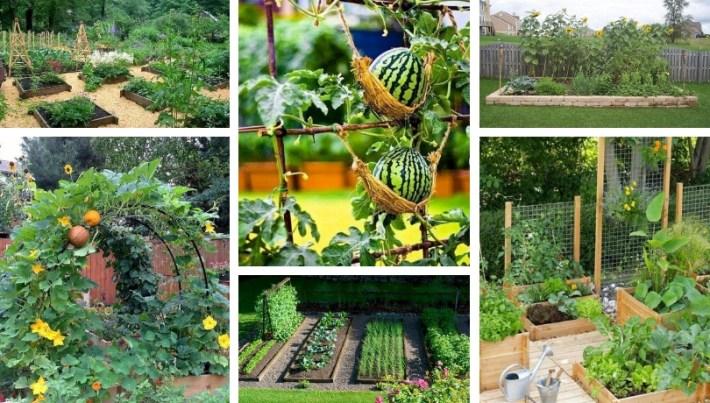 45 Affordable DIY Design Ideas for a Vegetable Garden | My desired .