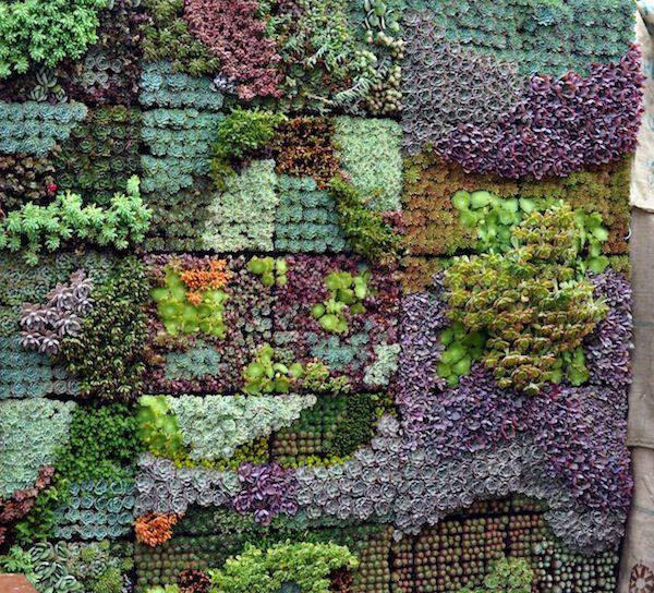 Stunning Succulent Gardens - The Cottage Market | Vertical .